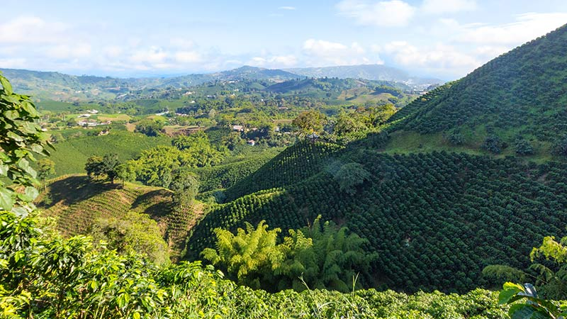 5 Colombia Coffee Plantation