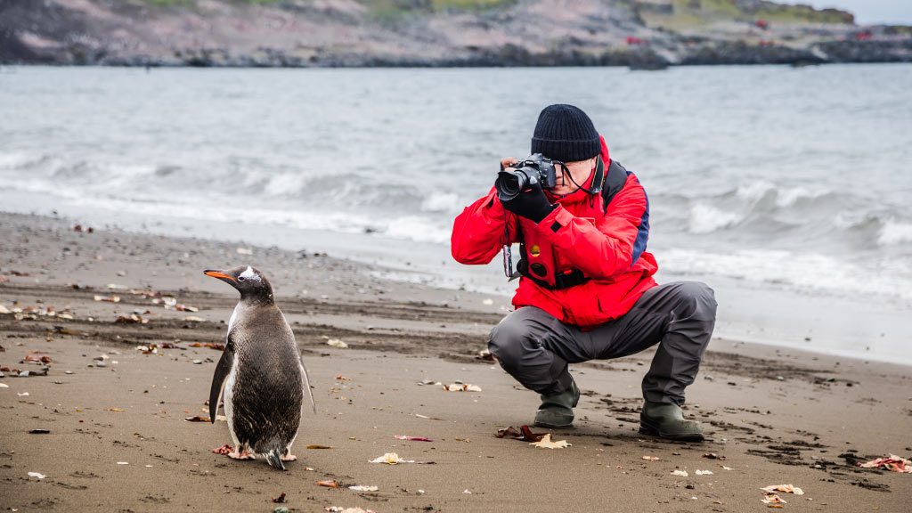 Antarctica Gentoo Penguin photographer
