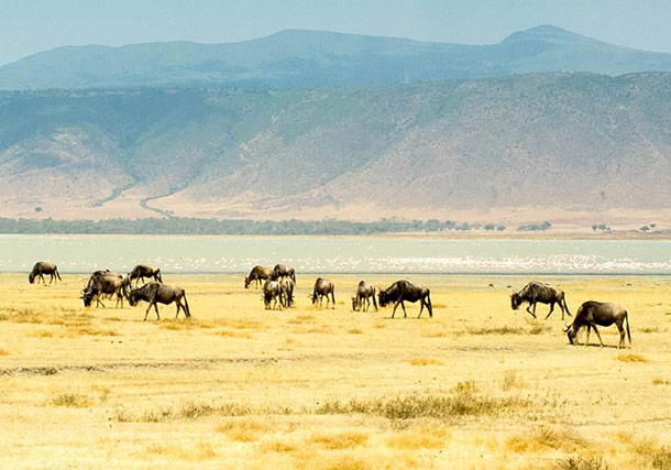 Africa East Africa Tanzania Herd search