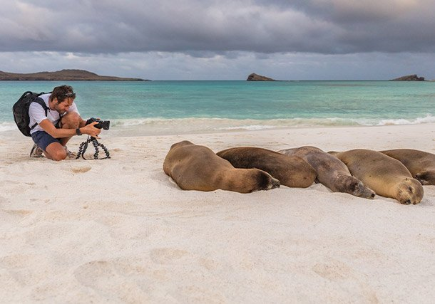 Americas Galapagos Sea Lions Guest search