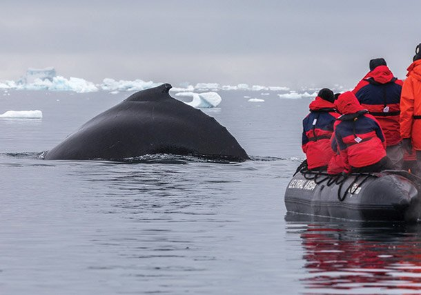 Antarctica Whale Close up search