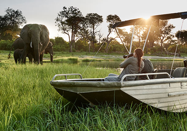 Botswana Safari in Style video search
