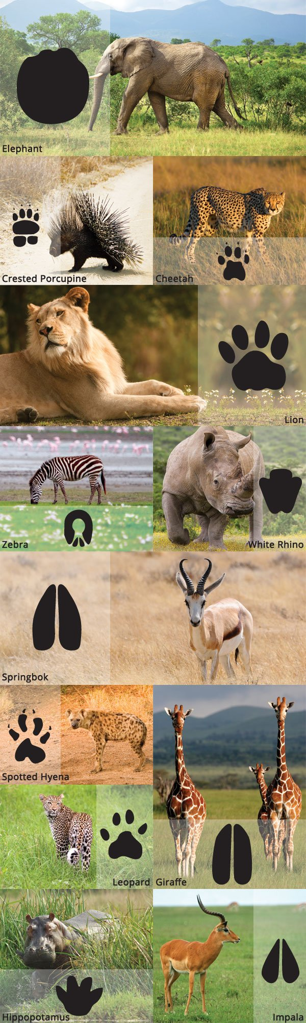 Animals and Their Prints