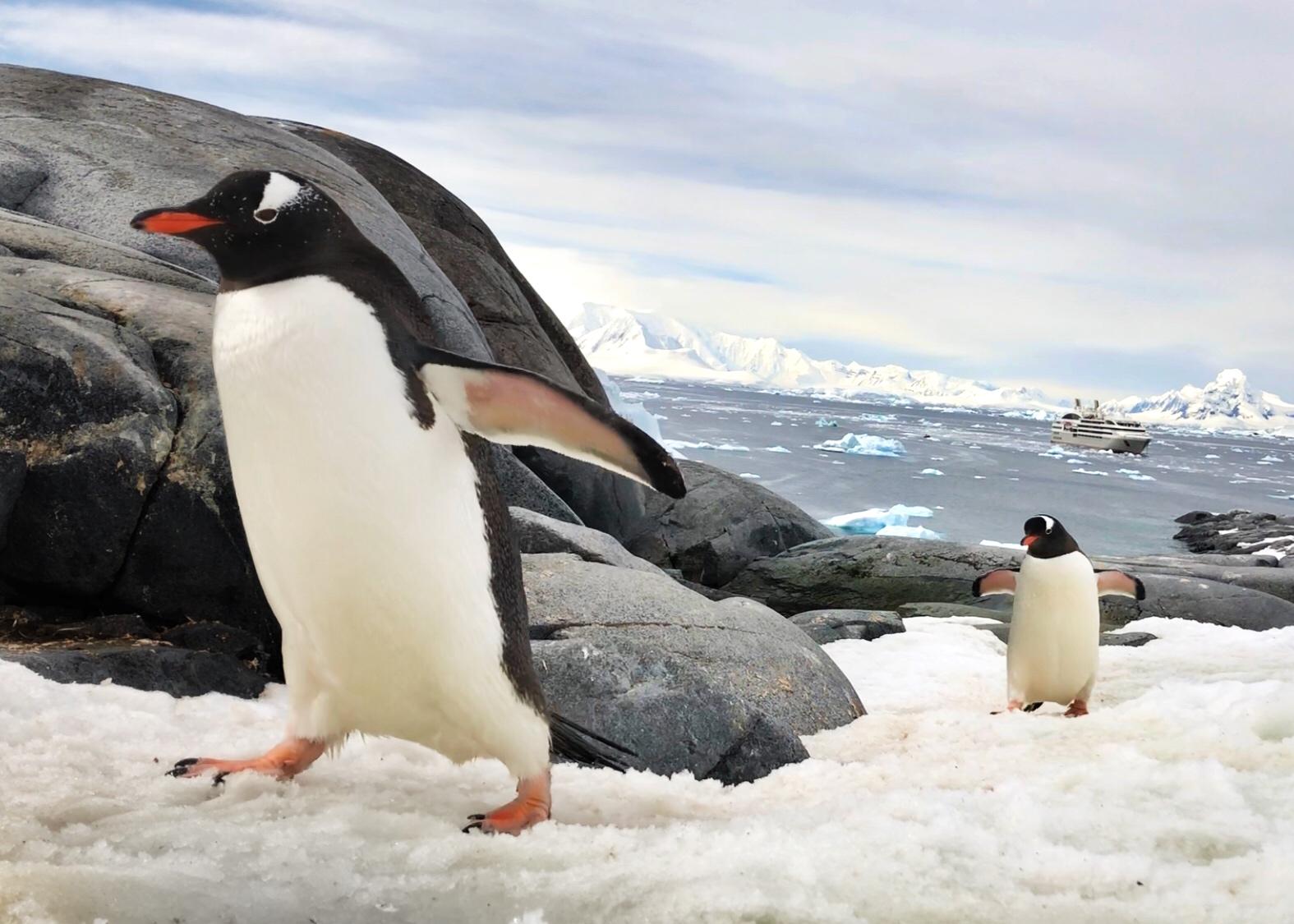 Inside the Ampersand: Antarctica Trip Log Dec 12-28 2017