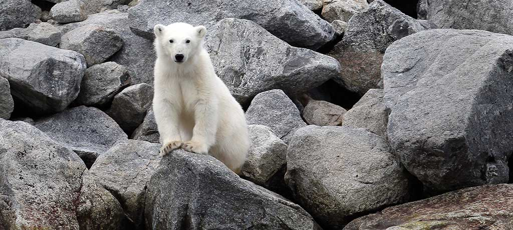 Seven Reason to Visit the Northwest Passage