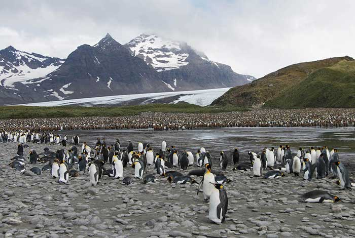28Dec_Day6_SalisburyPlainKingPenguinColony