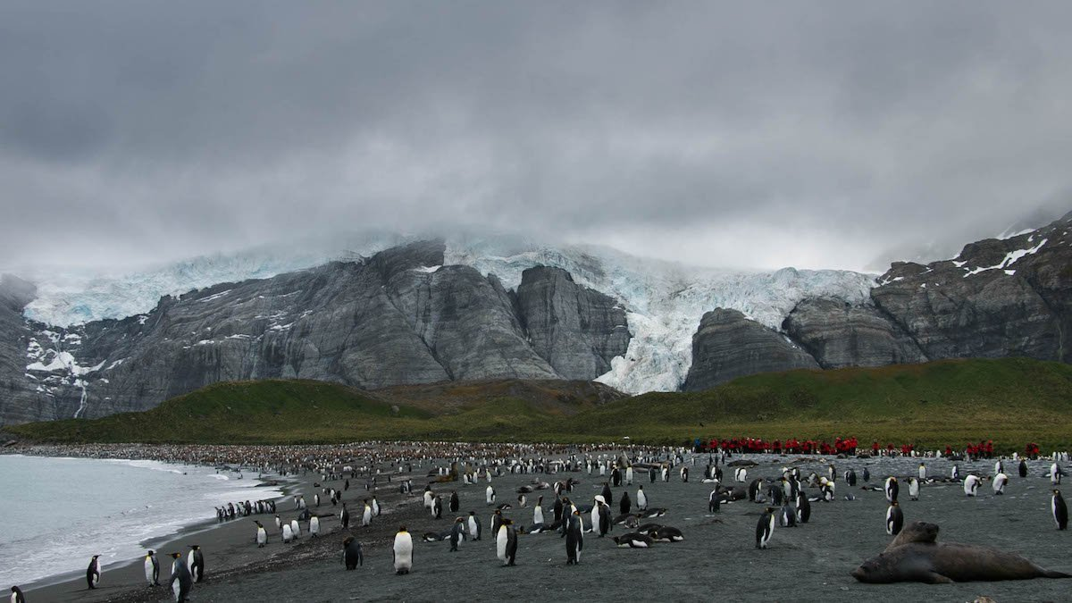 30Dec_Day8_GoldHarbourAmongstKingPenguinsAndSeals