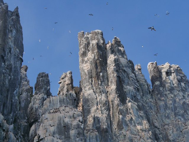 Alkefjellet bird cliffs