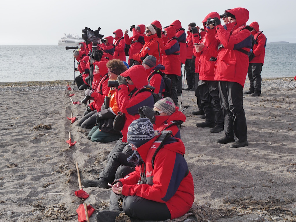 Walrus Watchers
