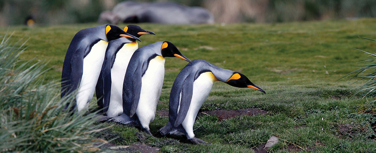 Antarctica South Georgia Top Five Reasons to Visit