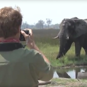 Living with Elephants on Born to Explore