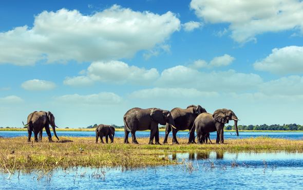 Tailor Made Botswana: Life in the Delta