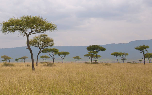 Post-Tour Extension: Masai Mara