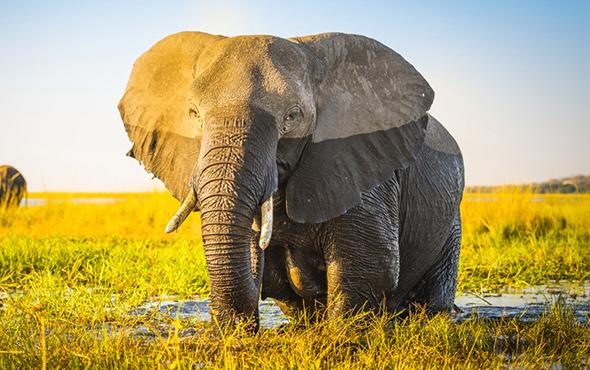 Holiday Botswana