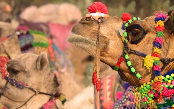 Taj Mahal & the Treasures of India - Pushkar Fair