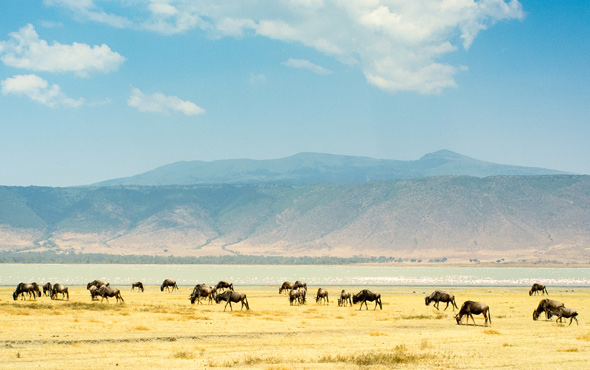 Tailor Made Tanzania: The Northern Circuit