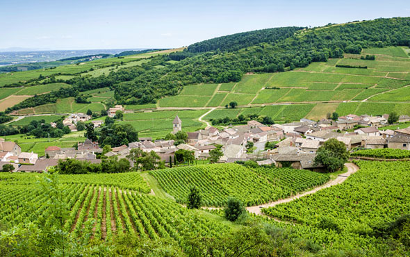 Food & Wine of France: Paris, Burgundy & Provence