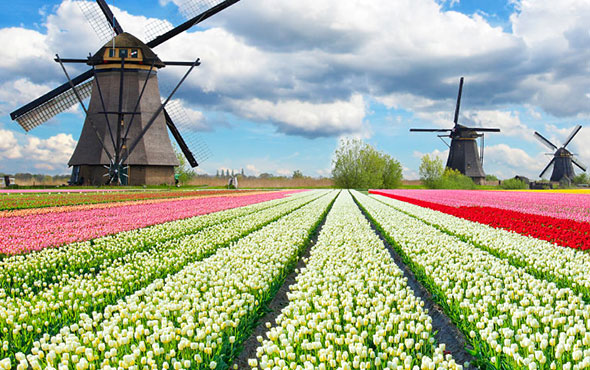 Cruising Holland & Belgium in Bloom