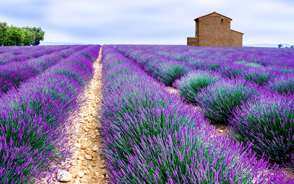 France: From Paris to Provence