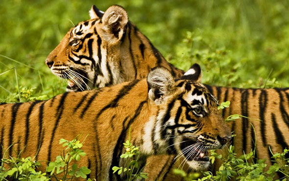 Tailor Made India: Wildlife & the Golden Triangle