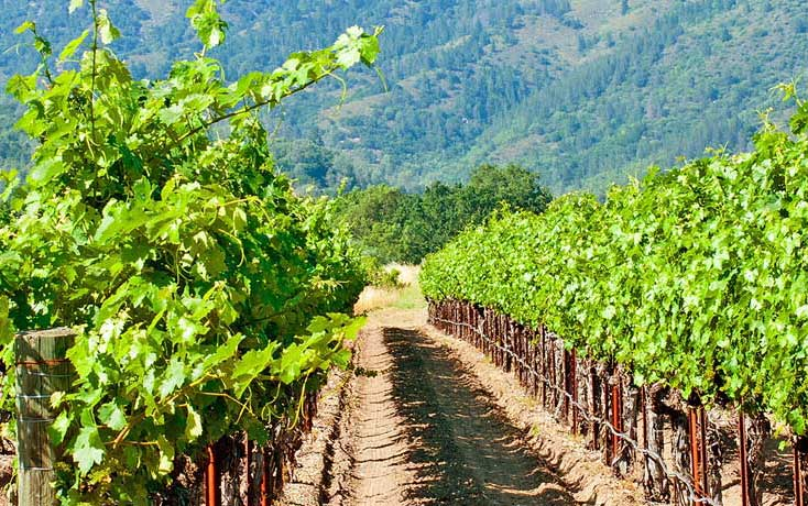 Tailor Made California: A Taste of Wine Country