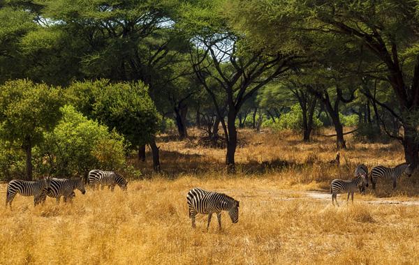 tanzania travel tanzania luxury safari abercrombie kent