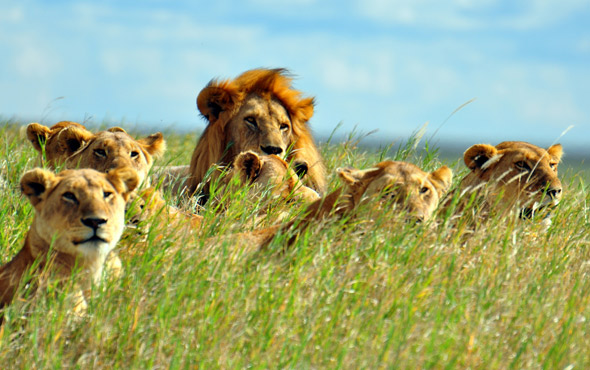 Tailor Made Tanzania: Private Reserve Safari