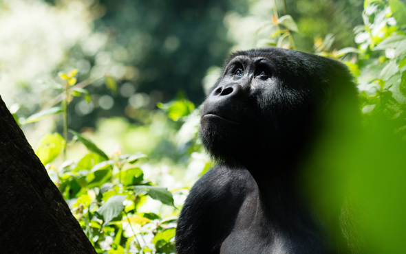 Tailor Made Uganda: Bwindi Impenetrable Forest