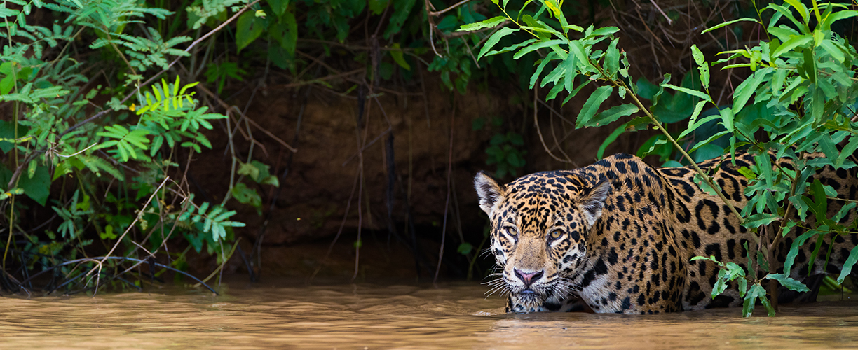0e03cde13469c Brazil: The Amazon, Pantanal & Iguazu Falls
