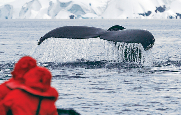Antarctica Guest On Zodiac Whale Tail