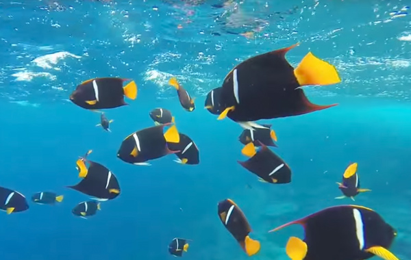 South America Galapagos Snorkel Fish School