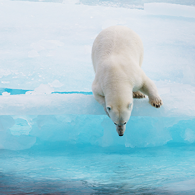 Arctic-Cruise-Polar-Bear-3up