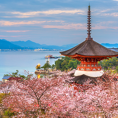Japan Cherry Blossom Cruise