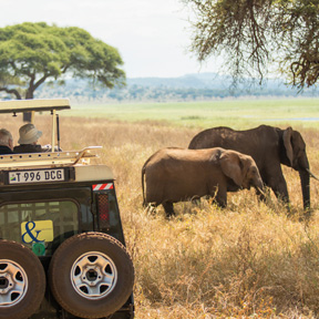Africa-Safari-Vehicle-Guests-Elephant-4up