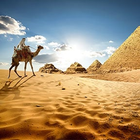 Middle East Egypt Bedouin Camel Pyramids