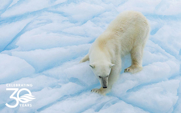 Arctic Cruise Adventure: In Search of the Polar Bear
