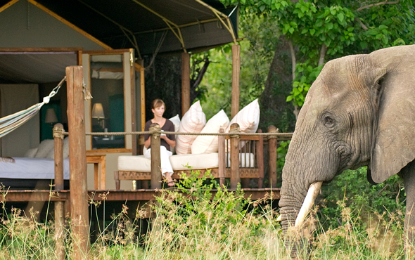 Africa Elephant Solo Accommodations