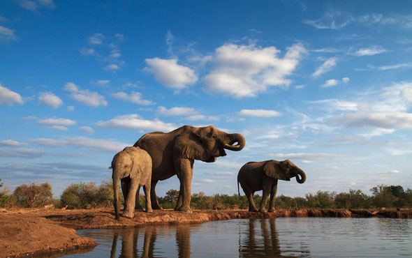 East Africa Elephants