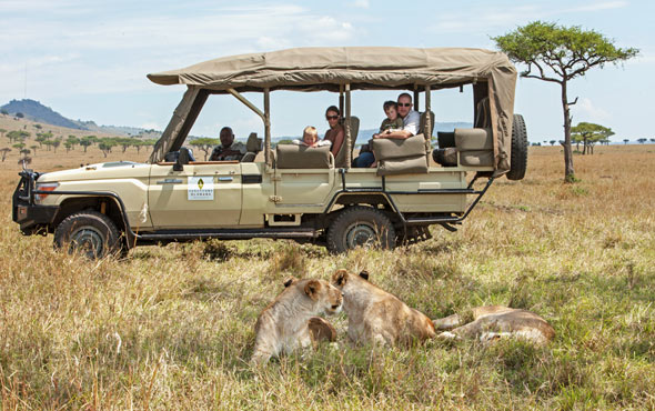 Lion Safari Travel